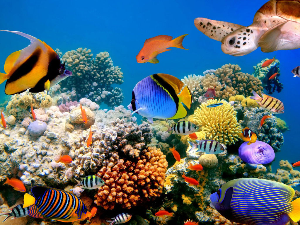 http://wallpapers-images.ru/1024x768/underwater_world/wallpapers/wallpapers-underwater_world-0.jpg