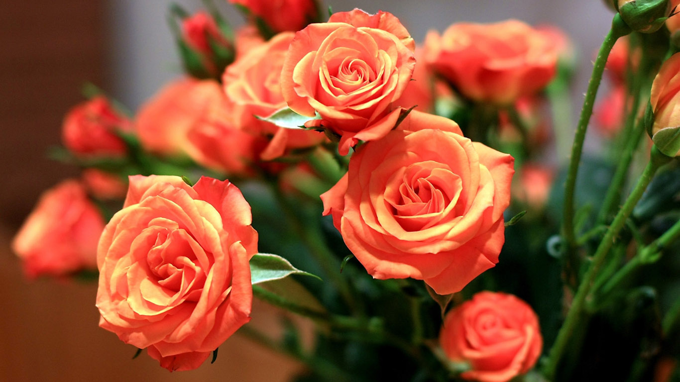 4-bouquet-of-red-roses-wallpaper-1366x76